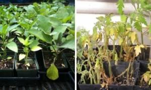 Освещение для растений дома