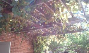 Сокодавка для винограда своими руками