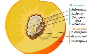 Тип плода у томата