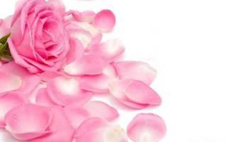 Сушеные лепестки роз применение