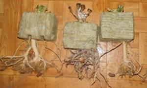 Семинария магазин семян отзывы