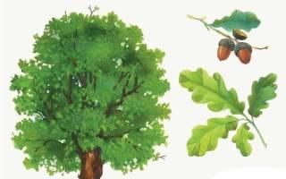 Листья разного цвета картинки