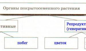 Составьте схему строения семени фасоли