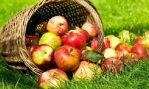 Настойка на яблочной кожуре