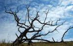 Как уничтожить дерево незаметно у соседа