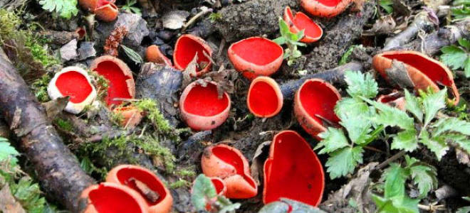 Как называется ножка гриба