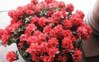Классификация комнатных растений таблица